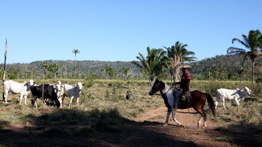 Dame fuego: qué tiene que ver la carne con la destrucción de la Amazonía
